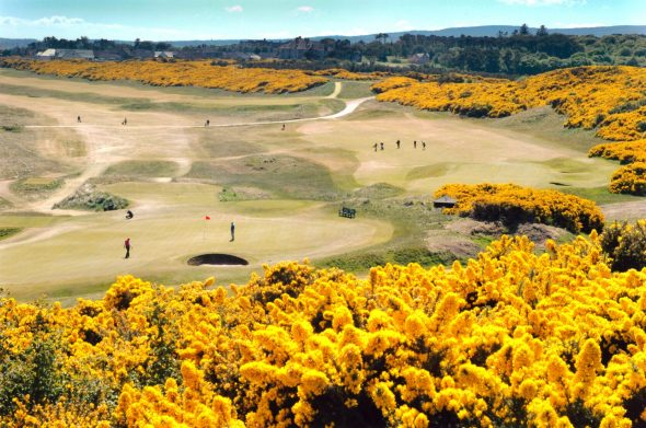 Rankings Don't Stop Royal Dornoch Pitching For Improvements